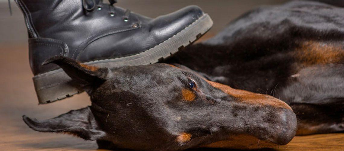 mobbning-mobbare-djurmisshandel